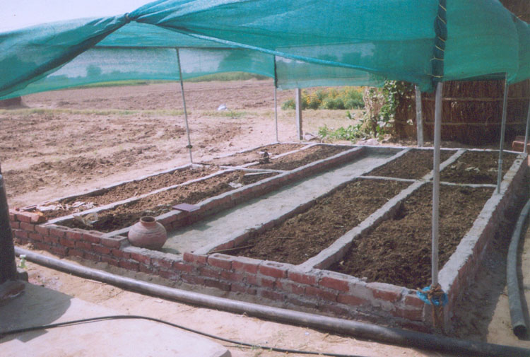 Vermicomposting Unit under FAO Project at Tripari, Gurgaon