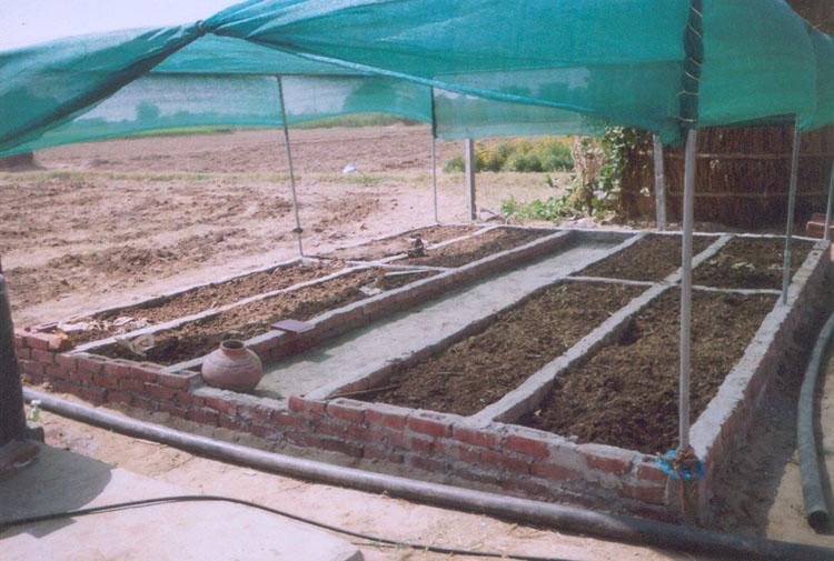 Vermicomposting Unit under FAO Project at Tripari, Gurgaon